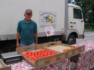 Fresh ripe tomatoes in June