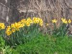 Philadelphia Green spring Garden at ESP